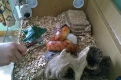 Rex at feeding time